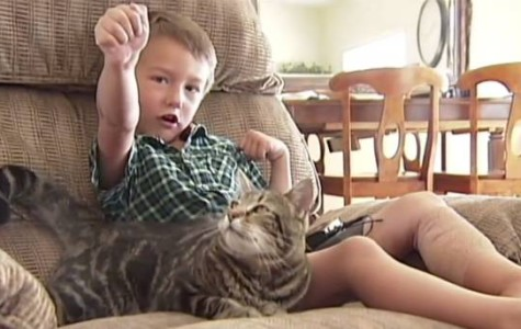 Cat Saves 4-Year-Old Boy From Vicious Dog Attack