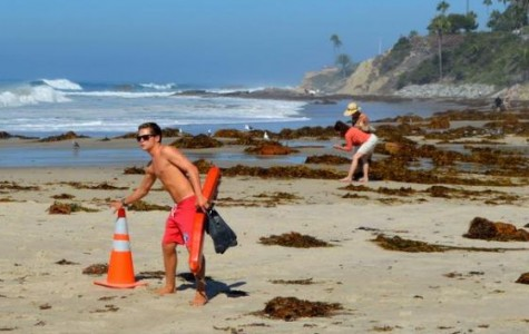 Mounds of Kelp Wash up O.C. Beaches
