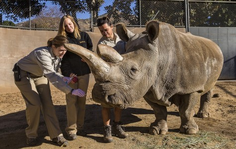 Five Northern White Rhinos Left in The World