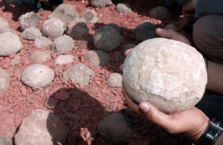Dinosaur Eggs Found