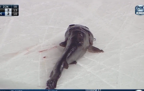 Nashville Predators Fans Smuggle In Giant Catfish At Playoff Game