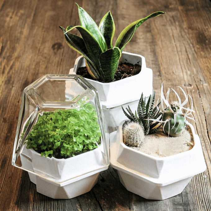 Plantereo: The Self-Watering Plant System That Combines Functionality and Aethetics
