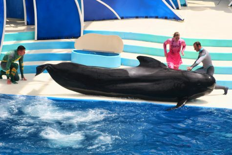What It Takes to be a Dolphin Trainer