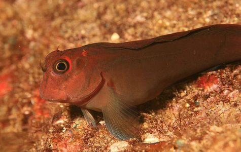 Australian Fish Evolving and Walking on Land