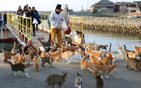 Tourists Greeted by 1,000 of Cats on Cat Island