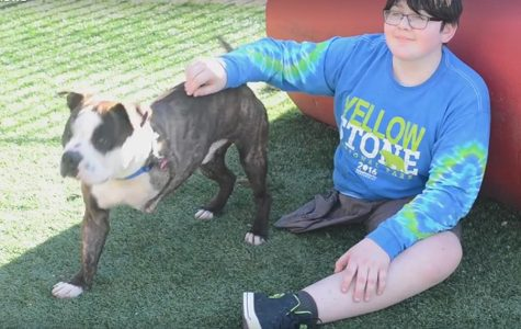 Cancer Survivor Finds a Three Legged Companion