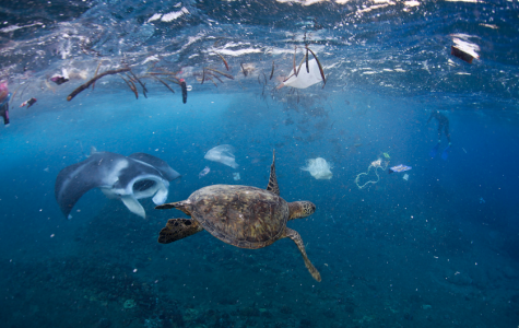 Trash Kills 100,000 Marine Animals Each Year