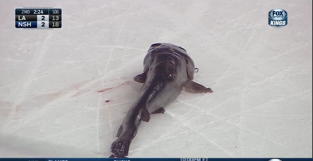 Nashville+Predators+Fans+Smuggle+In+Giant+Catfish+At+Playoff+Game