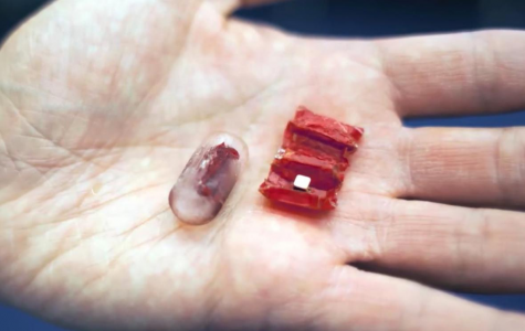 MIT Research Group Invents A Digestible Robot