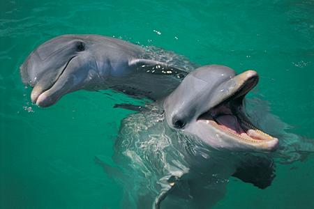 Dolphins Recorded Having a Conversation