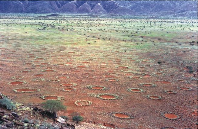 "Scientists Find Answers to Mysterious ""Fairy Circles"" in the Namibian Desert"