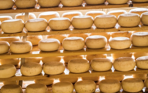 FDA May Change Regulations of Raw Milk Cheese