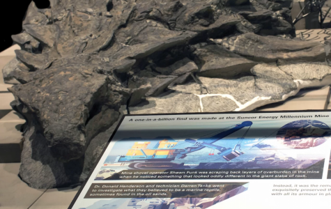 """Most Well Preserved Armored Dinosaur"" Found in Canadian Mine"