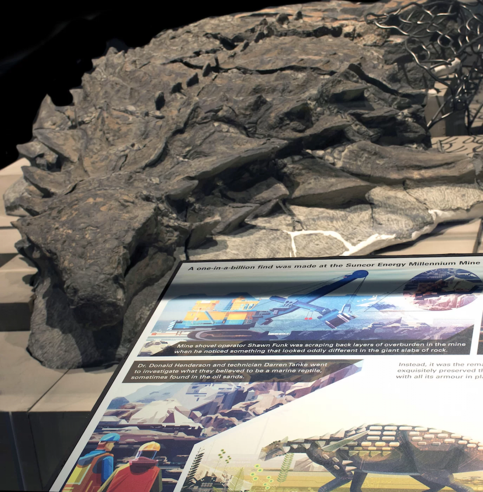 """""""Most Well Preserved Armored Dinosaur"""" Found in Canadian Mine"""