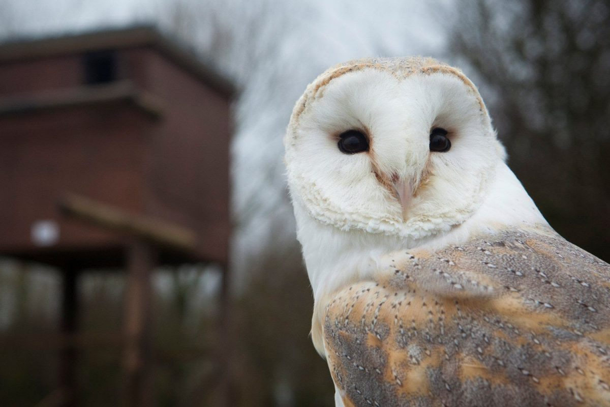 Why+Do+Barn+Owls+Never+Seem+To+Lose+Their+Hearing%2C+Even+With+Old+Age%3F