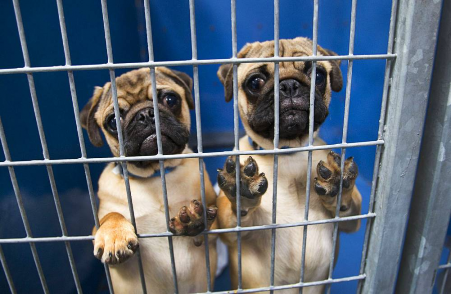 "California- The First State To Ban Sale Of ""Puppy Mill"" Pets In Pet Stores"