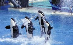 SeaWorld Removes Hundreds Of Employees From Their Staff