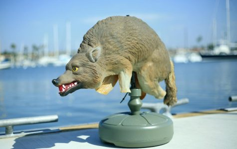 Plastic Coyotes In Newport Beach To Scare Off Sea Lions