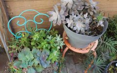 "No Need For ""Green Thumb"" These Plants Survive on Near Neglect"