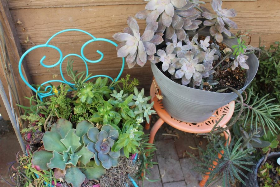 """No Need For """"Green Thumb"""" These Plants Survive on Near Neglect"""