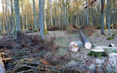 Poland Faces Big Fines for Logging