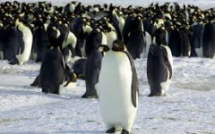 Kingdom of 1.5 Million Penguins Discovered by Scientists