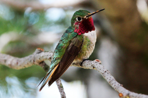 Five Strange and Beautiful Hummingbirds