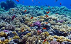 Your Sunscreen May Be Damaging the Coral Reef