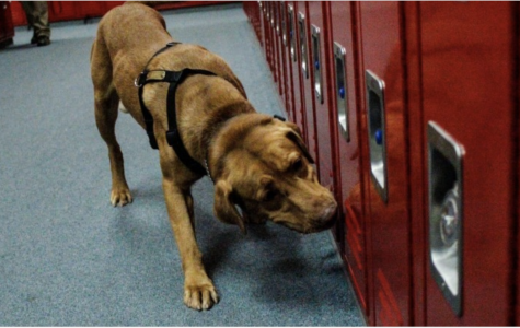 "PYLUSD Employs ""Detection Canines"" at Esperanza High School"