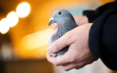 New Kim: $1.9 Million Pigeon