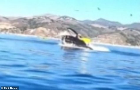 Humpback Whale attacks two kayakers whale-watching at Avila Beach