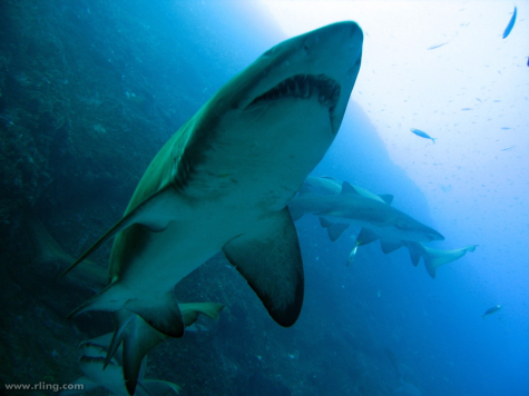Shark Attacks in Australia Last Year: First Time Since 1929