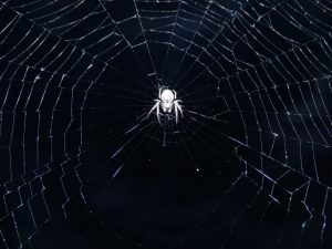Scientists Have Turned Spider Webs into a Musical Instrument