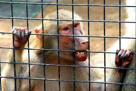 Should Animals Be Kept In Captivity?